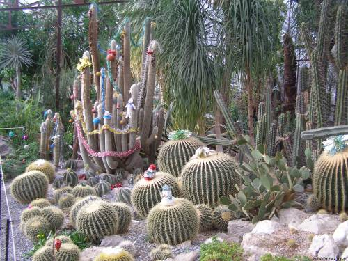 Зима ялта никитский ботанический сад